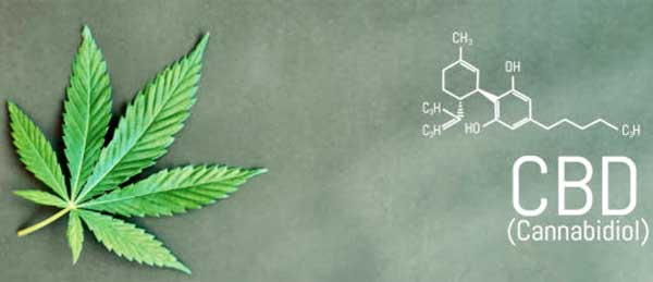 Visit the groovyhempcompany.com About page to learn more about what we do in the CBD space.